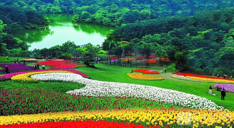 石象湖生态风景区五彩斑斓的郁金香花海