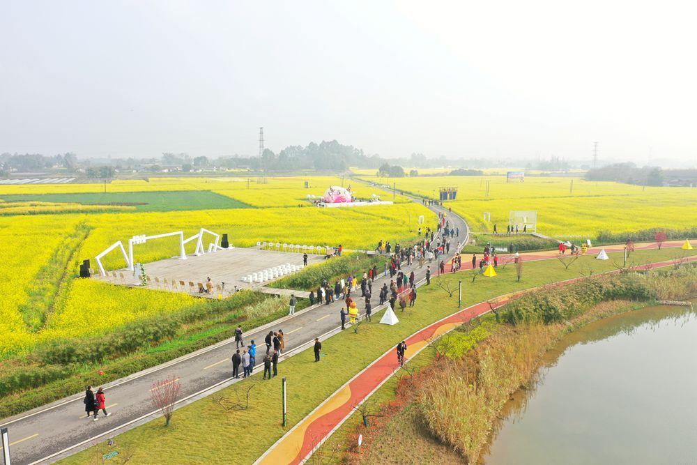 促进现代农业发展 成都邛崃举行首届天府田园油菜花节